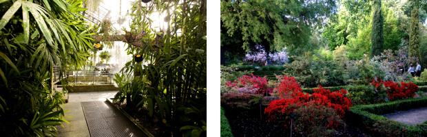 王立植物園